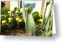 Blooming Cactus Greeting Card