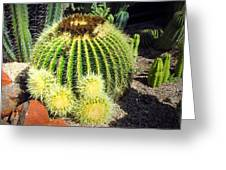 Blooming Cactus Two Greeting Card