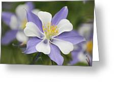 Blooming Columbine Greeting Card