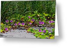Blooming Cross Vines Along The Beach Greeting Card