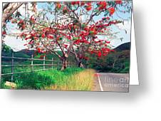 Blooming Flamboyan Trees Along A Country Road Greeting Card