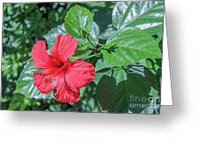 Blooming Hibiscus Greeting Card