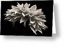 Blooming II Greeting Card