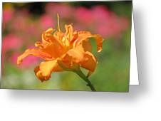 Blooming In August Greeting Card