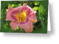 Blooming In Pink Greeting Card