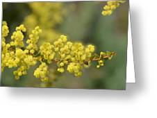 Blooming In Yellow Greeting Card