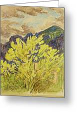 Blooming Palo Verde Greeting Card