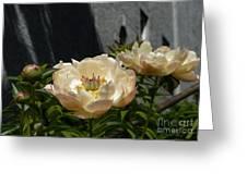 Blooming Peonies Greeting Card