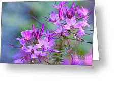 Blooming Phlox Greeting Card