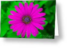 Blooming Purple Greeting Card