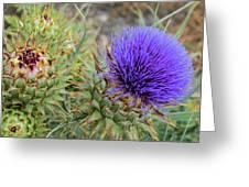 Blooming Purple Teasel Greeting Card