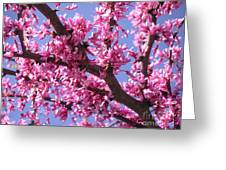 Blooming Red Buds Greeting Card