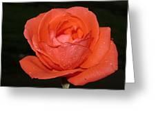 Blooming Rose Greeting Card
