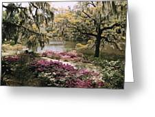 Blooming Shrubs And Trees Greeting Card