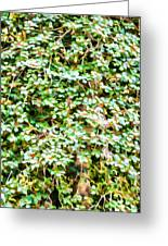 Blooming Shrubs  Greeting Card