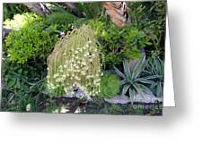 Blooming Succulent Plant. Amazing Greeting Card