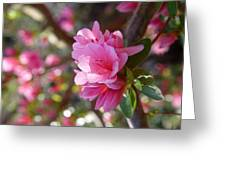 Blooming Tree Greeting Card