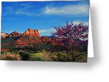 Blooming Tree In Sedona Greeting Card