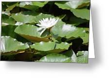 Blooming Waterlily  Greeting Card