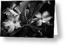 Bloomisted Greeting Card