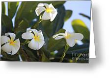 Blooms In Paradise Greeting Card