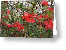 Blooms In The Alley Greeting Card