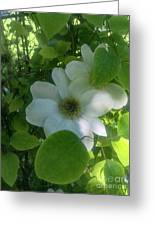 Blooms In Vine Greeting Card