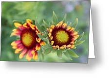 Blooms Of Color Greeting Card