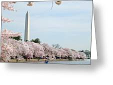 Blooms Of The Tidal Basin Greeting Card