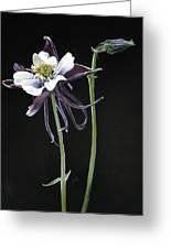 Blossom Greeting Card