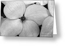Blossom In Black And White Greeting Card