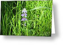 Blossom In The Grass Greeting Card