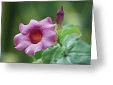 Blossom Of Allamanda Greeting Card