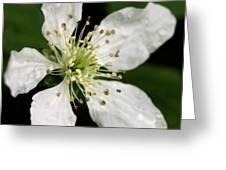 Blossom Square Greeting Card