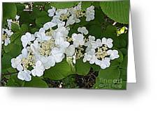 Blossom Sunbath  Greeting Card