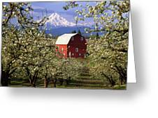 Blossom Time Greeting Card