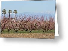 Blossom Trail 1 Greeting Card