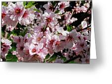 Blossoming Almond Branch Greeting Card