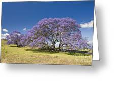 Blossoming Jacaranda Greeting Card