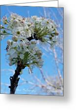 Blossoming Pear Greeting Card