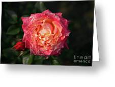 Blossoming Rose Greeting Card
