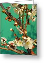 Blossoms Against Green Greeting Card