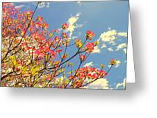Blossoms Against The Sky Greeting Card