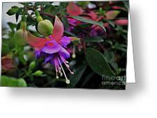 Blossoms And Blooms Greeting Card