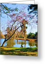 Blossoms And Spanish Moss Greeting Card