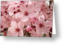 Blossoms Art Prints 63 Pink Blossoms Spring Tree Blossoms Greeting Card