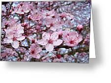 Blossoms Art Prints Nature Pink Tree Blossoms Baslee Troutman Greeting Card