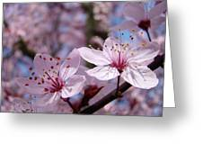 Blossoms Art Prints Pink Spring Tree Blossoms Canvas Baslee Troutman Greeting Card