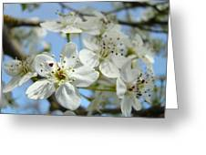 Blossoms Art Prints Whtie Spring Tree Blossoms Blue Sky Baslee Greeting Card