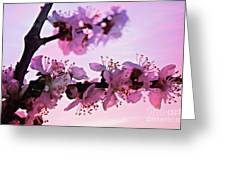 Blossoms At Sunset Greeting Card